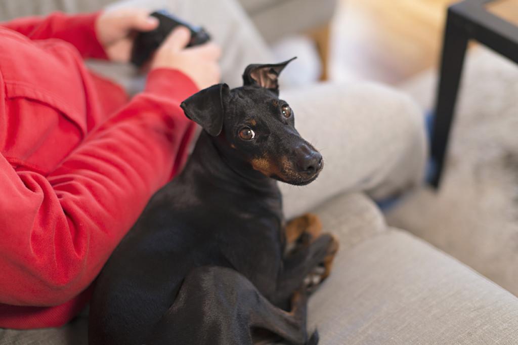 Mies ja koira sohvalla